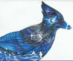 MR. STELLAR'S BLUE JAY  (Backgroundless) by AmericanBlackSerpent