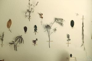 Plants on the Wall by TransientArt