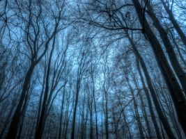 Branches No2 HDR by Risen-From-The-Ruins