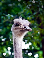 Animals at the Zoo by lee-sutil