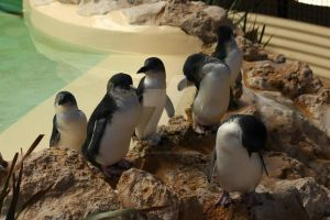 Little Penguins by emeraldeye14