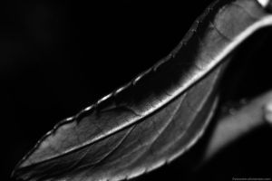 The leaf. by Freecaster
