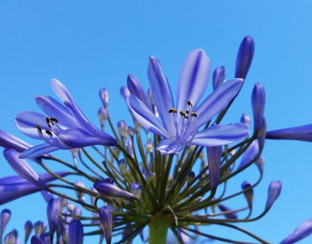 Blue Against the Sky by BlackHawk00021