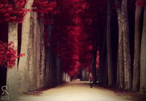 Red alley by Behindmyblueeyes