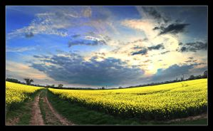 Yellow - Panorama by thesolitary