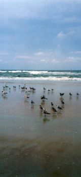 The Sandpipers by FireGecko0104