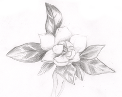 Sketch: Flower by XxMaddy