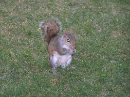 Squirrel Chews Cigarette Butt by ssnapey22