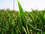 Grass by paratodos85