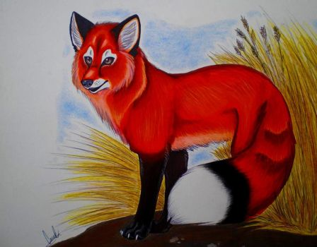 Realistic Red Fox by Yumi-San1688