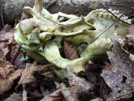 skull and leaves by fierysoul