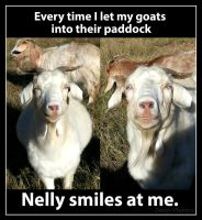 Nelly the happy goat by DesignKReations
