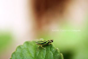 Green Insect by Almirith7
