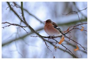 Freezing my Feathers off by OliverBPhotography