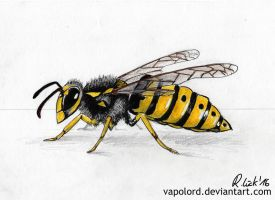 Wasp Practise Drawing by Vapolord