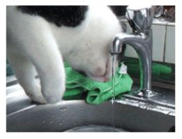 ..Allie vs The Tap.. by Ro-Row