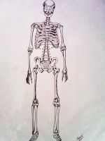 Front of Skeletal by SherryYuki