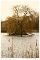 The Willow Pool by In-the-picture
