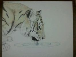 Tiger (color) by MaiaCarlson