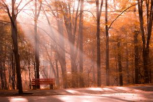 Autumn Rays by PJohnny