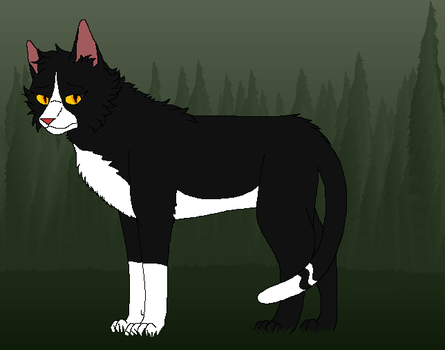 Warrior cats-Violetpaw by Kityote