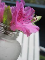 Azalea in a Jar by Geak-of-Nature