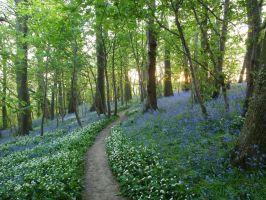More blue bells by Fraped