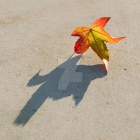 shadow of a leaf by photographybypixie