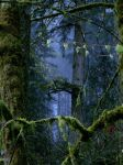 The Forest Surreal by chamois-shimi