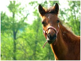 Small racehorse by T3rinQa