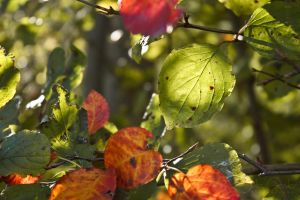 leaves are changing by JuliaGeisler