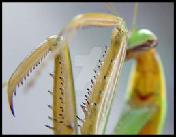 Mantis 02 by dcl-photo