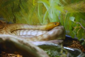 Young Woma Python by ManitouWolf