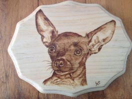 Zoe the Chihuahua by H20dog