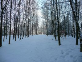 winterforest V by mimose-stock
