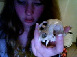 cat skull once more by CannabisCow