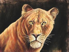 Lioness by Bisanti