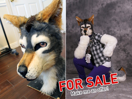 [SOLD] Realistic Canine Partial by Tsebresos