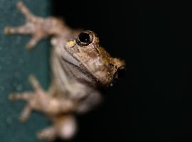 frog 1 by mamamac