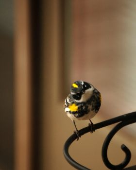 Bird 2 by AndersonPhotography