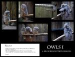Owls I stock pack by Mithgariel-stock