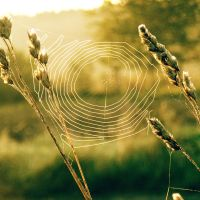 small cobweb by all17