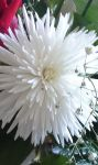 Whiteness by MyLoveForYouEternity