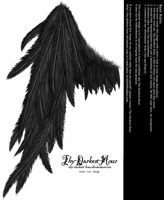 Draped Wing - Black by Thy-Darkest-Hour
