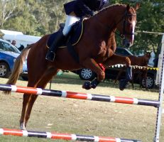 Showjump side on by Chunga-Stock