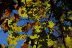 2014-10-22 Colors of the Day 08 by skydancer-stock