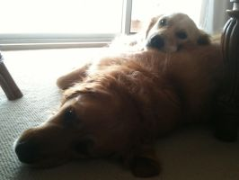 My dogs X3 by A-R-T-3-M-I-S