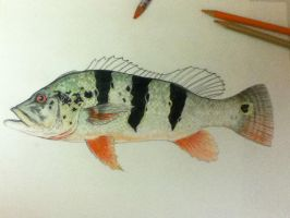 Peacock Bass .05 by scientificartist