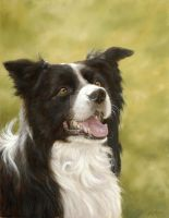 Border Collie Portrait by johnsilverfinearts