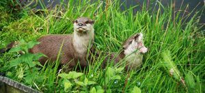 Screaming Otter by TigerSparkles